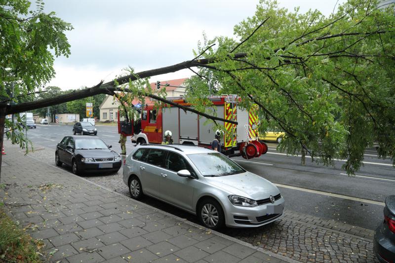 Baum kippte auf Fahrbahn