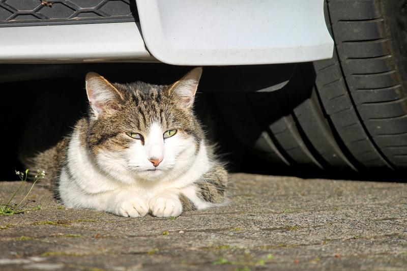 Verkehrsunfall fordert Katzenleben  Eigentümer gesucht