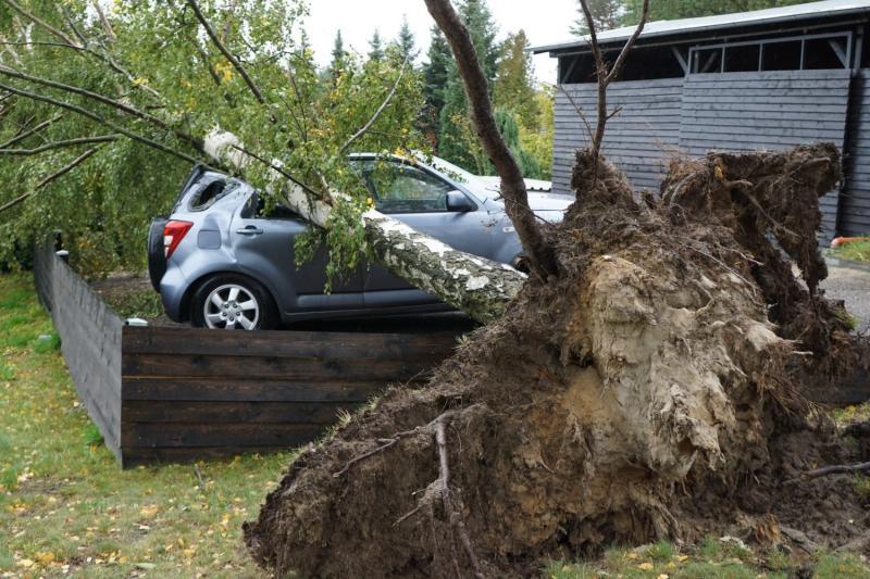 Baum stürzt auf PKW