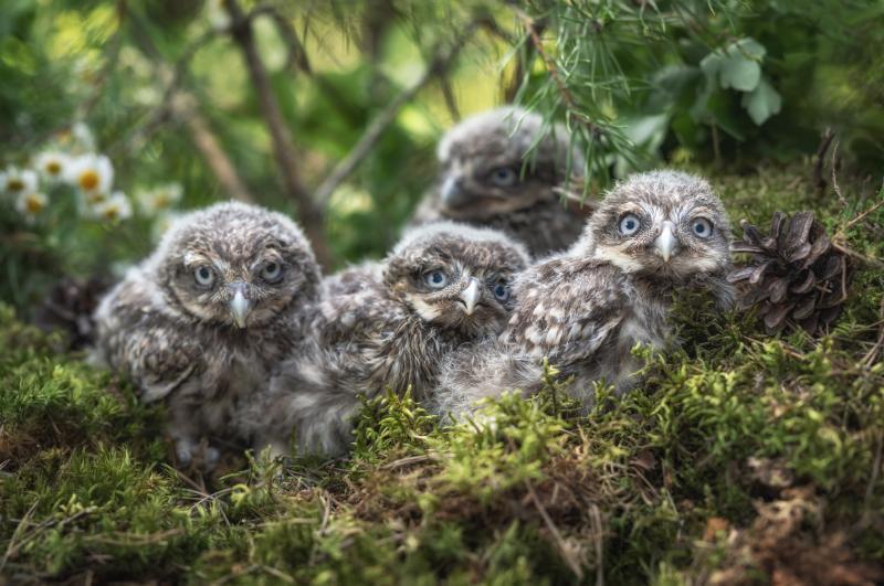 Zoo Hoyerswerda wildert erneut Steinkauz aus