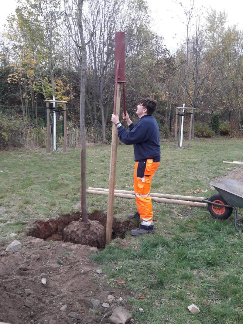 Baumpflanzungen schreiten voran