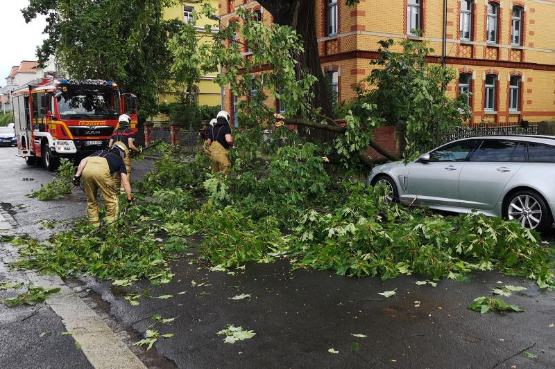 Teile eines Baumes stürzten auf PKW